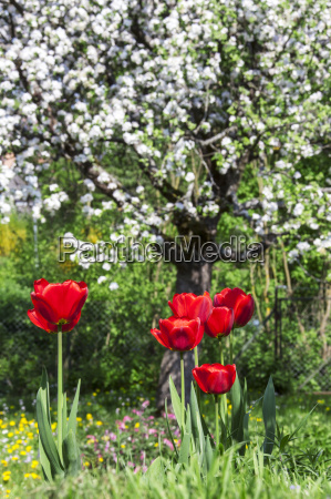 garden flower flowers plant flora blossoms