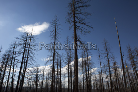 burned forest in bryce canyon national