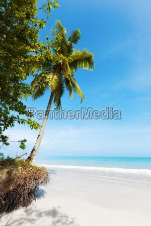 dream beach vertical shot