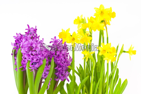 easter bells and hyacinths