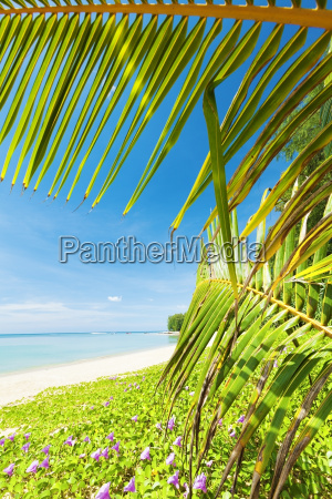 tropical beach in sunny day vertical
