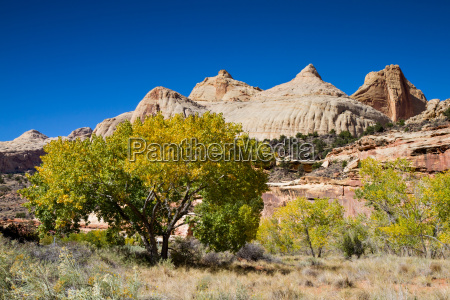 trees in the capitol reef national