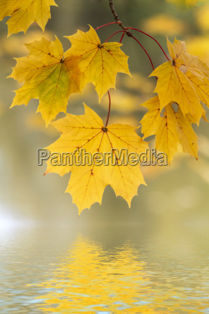 leaves with autumn colors on the