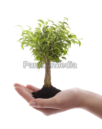 hand holding green tree isolated on