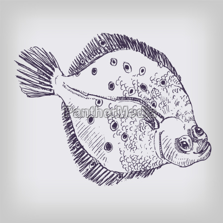 drawing plaice