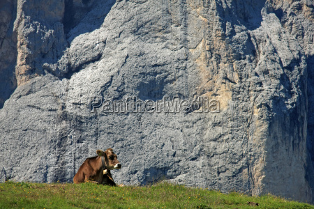 animal alps sight view outlook perspective