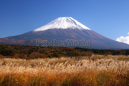mt fuji with japanese silver grass