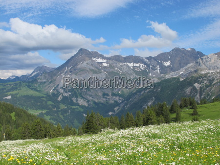 meadow with flowers and mountains in