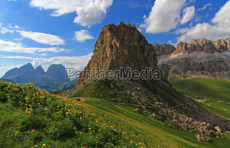 mountains plant alps alp flower flowers