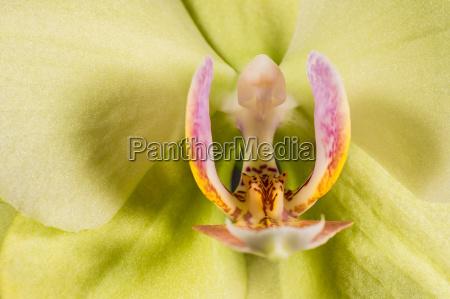 detalhe flor planta colorido ornamento violeta