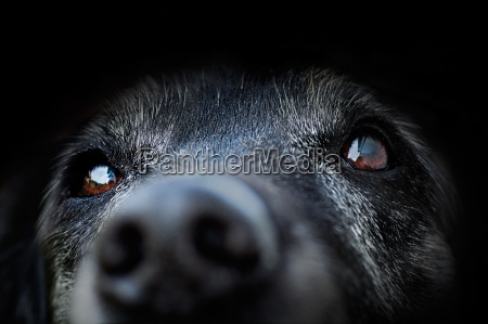 dyrlig hund