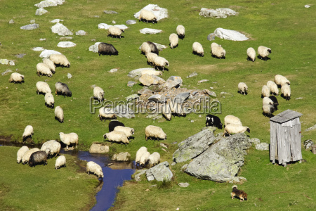 a large group of sheep on