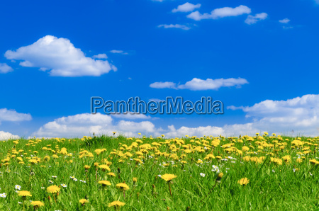 spring meadow with sun ray