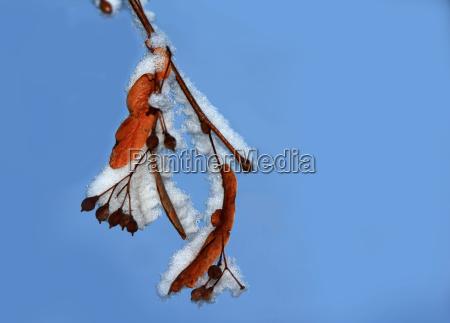 leaf tree sperm lime firmament sky