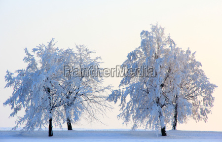 baum baeume winter abend abendrot eis
