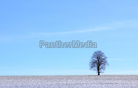 tree winter field meadow firmament sky