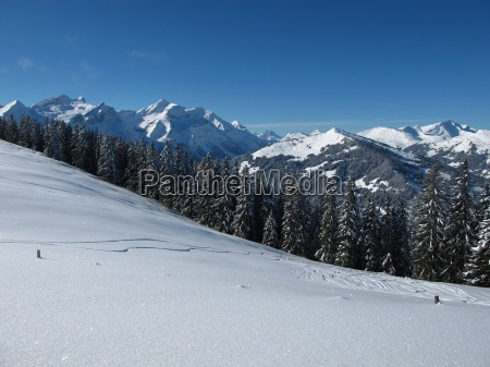 mountains oldenhorn and vorder walig forest