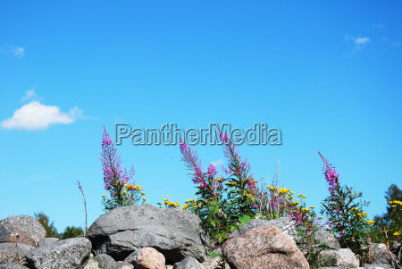 wild flowers at stonewall