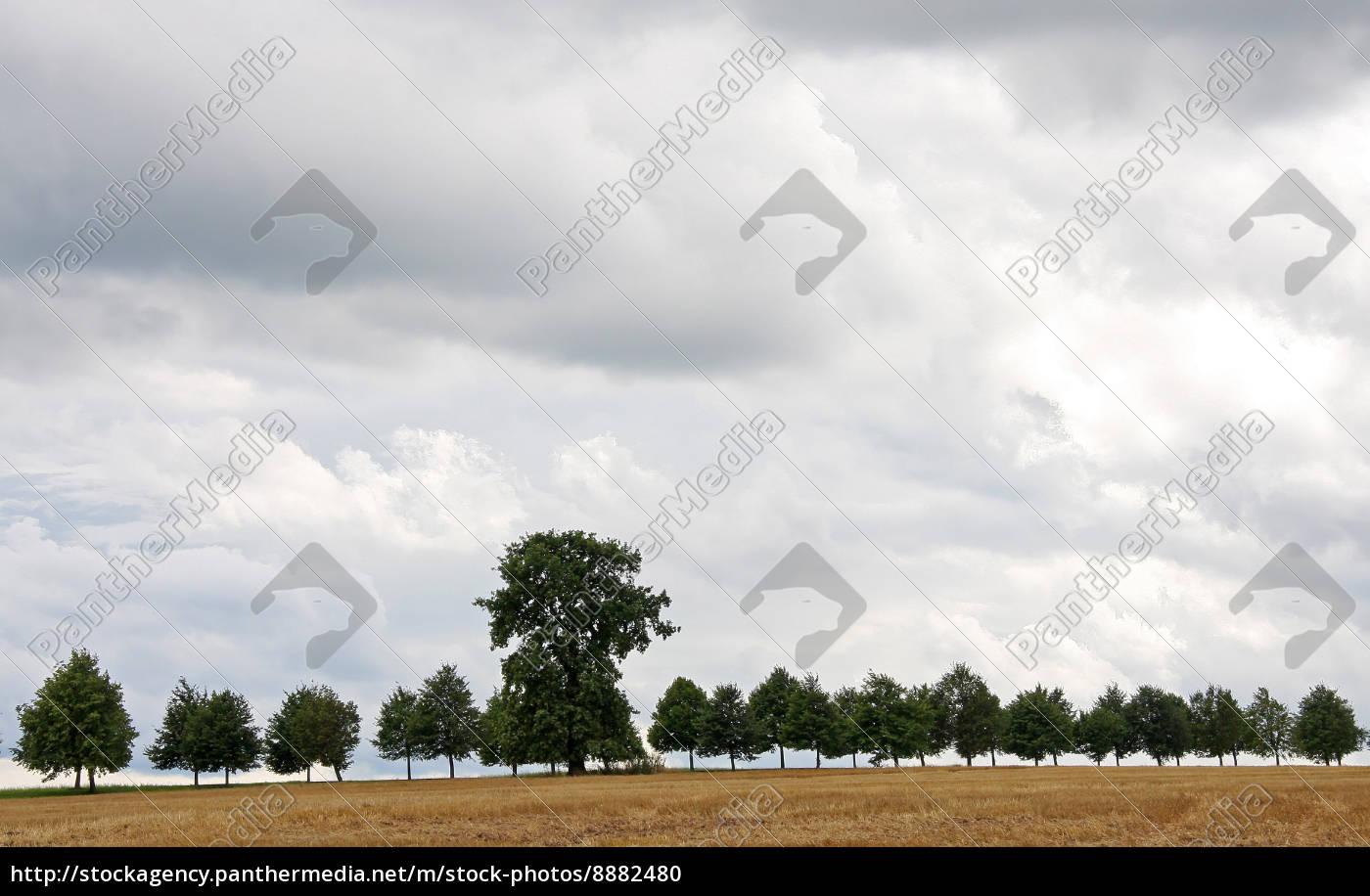 tree, trees, field, summer, summerly, path - 8882480