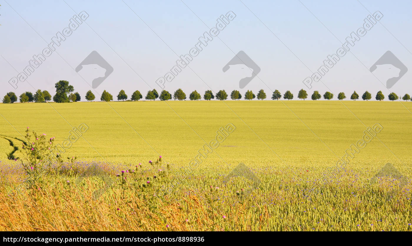 coleseed, field, spring, avenue, scenery, countryside - 8898936