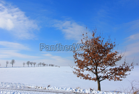 blue tree winter oak autumn foliage