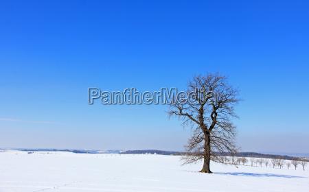 blue, tree, winter, oak, winter landscape, firmament - 8905808