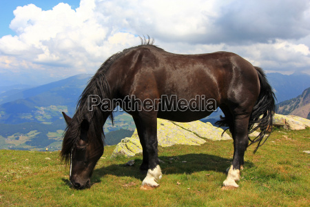 summit, horse, horses, sight, view, outlook - 8905188