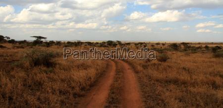 path through the serengeti