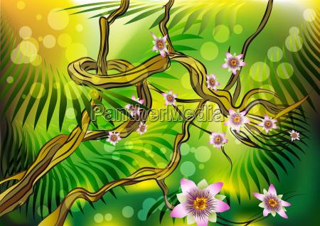 blossoming liana