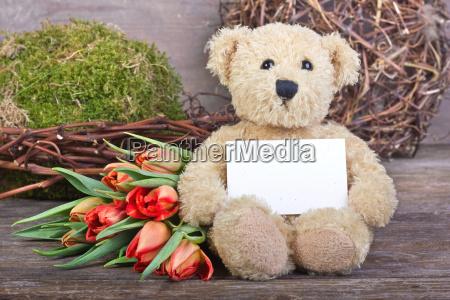 teddy - 8956722
