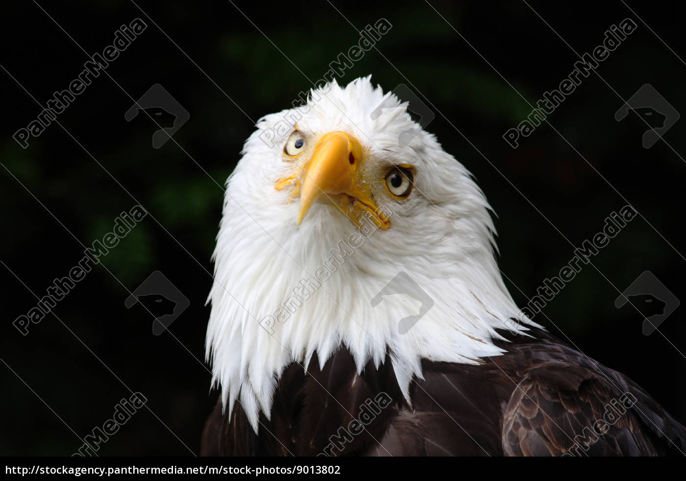bird, birds, eyes, raptor, feathers, beak - 9013802