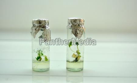 little plants in a jar