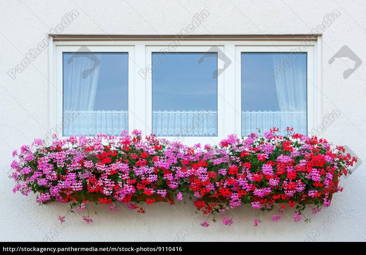 blumenfenster - 9110416