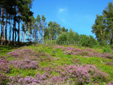 heathland in the highlandsrdigital small sensor