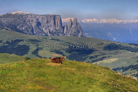 mountains dolomites alp summit sight view