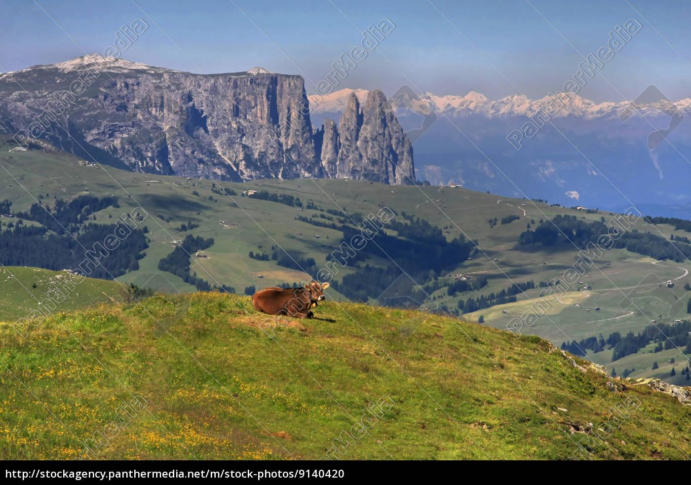 mountains, dolomites, alp, summit, sight, view - 9140420