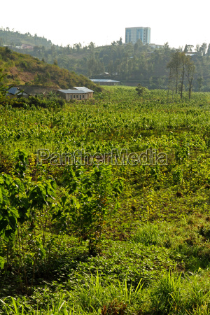 african valley agricultural crops