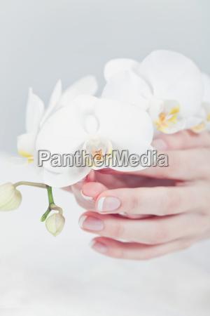 beautiful female feminine hands after a