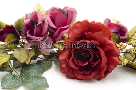 red rose with garland
