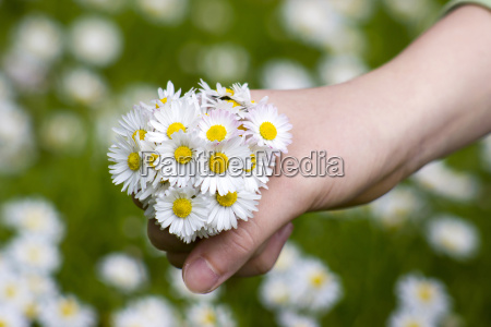 daisies a gift for the