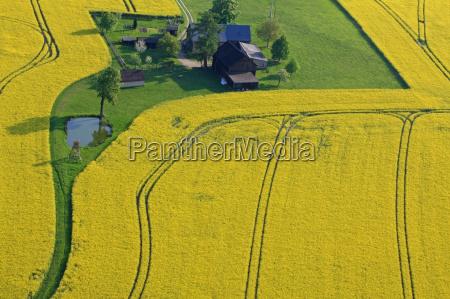 Rape field, spring, aerial photograph, farm, scenery, countryside - 9268524