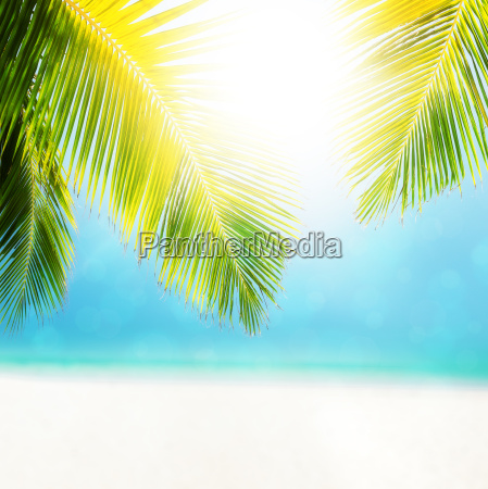 colorful abstract composition of the tropical