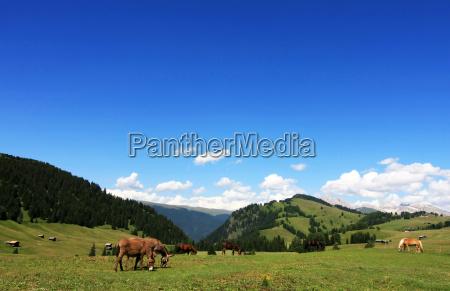 mountains, dolomites, alp, donkey, high mountains, firmament - 9322072