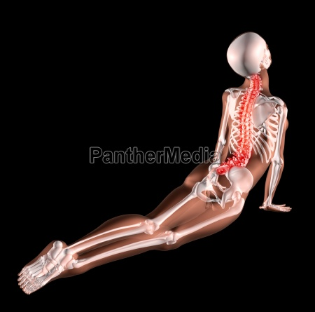 female skeleton stretching back