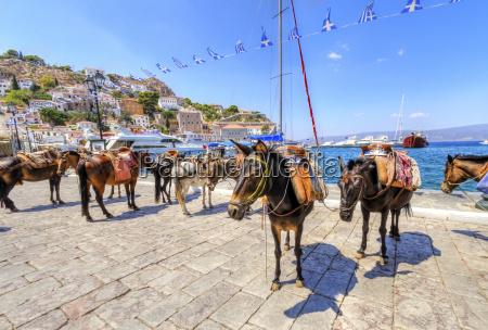 burros en la isla griega