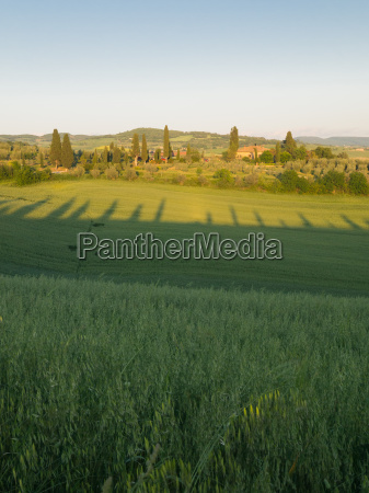 green field in tuscan landscape at