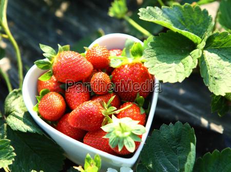 freshness strawberry on heart shape bowl