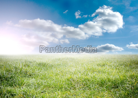 beauitful green meadow with sunshine and