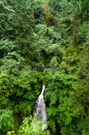 waterfall and lush forest