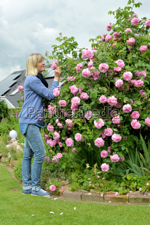 woman smelling perfume rose in the